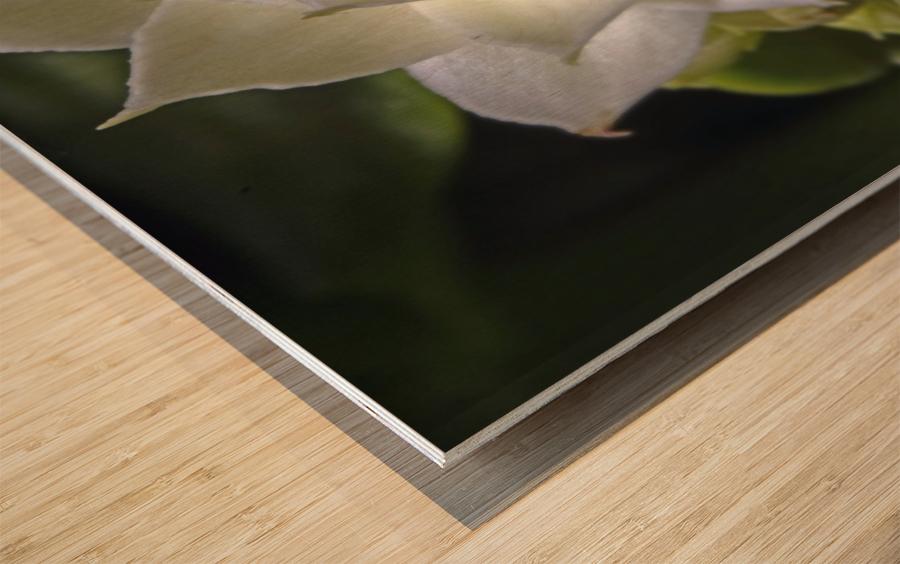 Serein Wood print