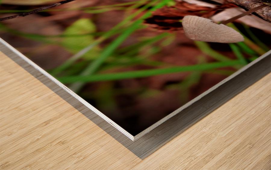 Cueillette sauvage Wood print