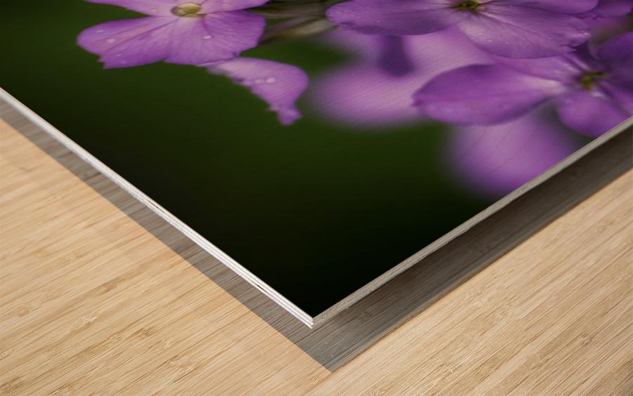 Magenta Wood print