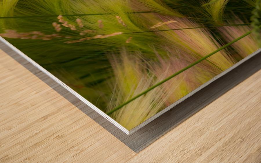 Grasses Of Summer Wood print