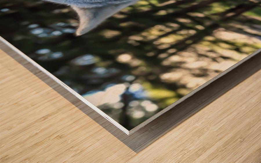 Wolf Dog Snarling Wood print