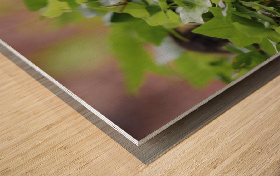 Duck In Plants Wood print