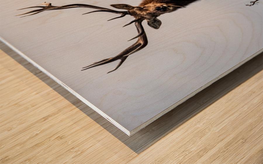 Tule Elk Wood print