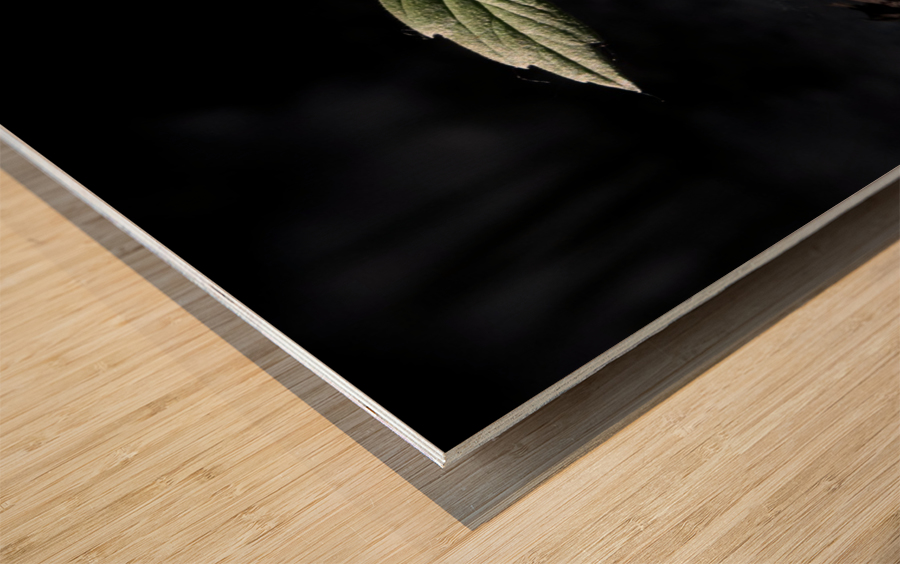 Young Sapling Wood print