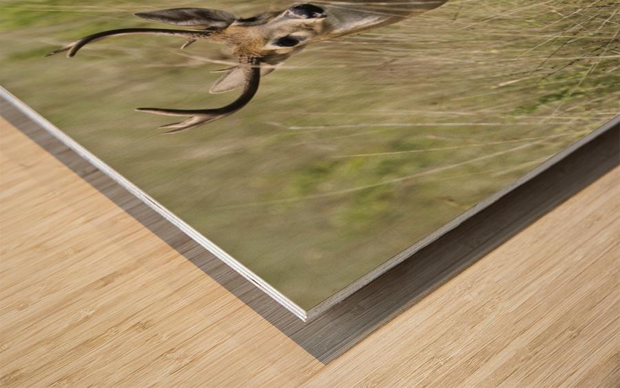 White Tailed Dear Wood print