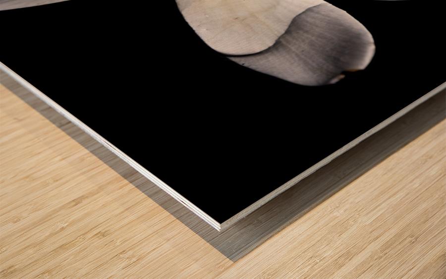 Simplicity Wood print