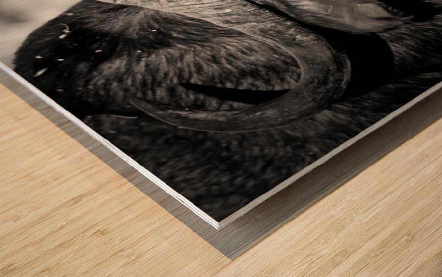 AdriaanPrinsloo 17077 Wood print