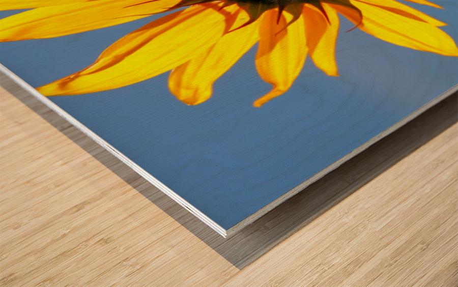 Glowing Heliopsis Wood print