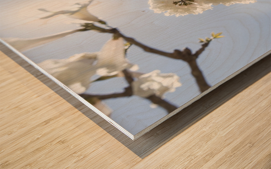 Bright white - glow Wood print