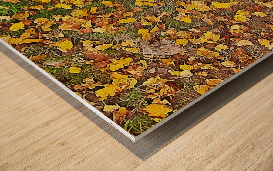 An Autumn Carpet Wood print