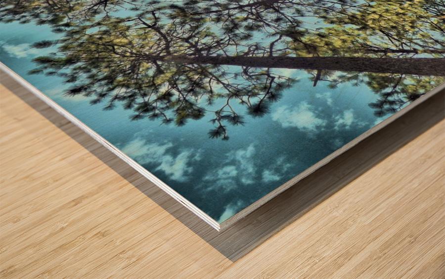 Tree Tops Wood print