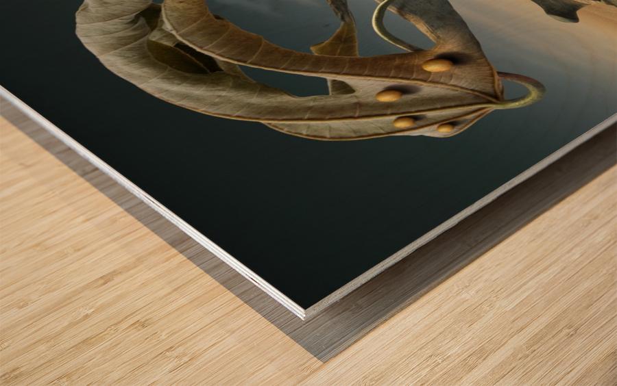 K_214 Wood print