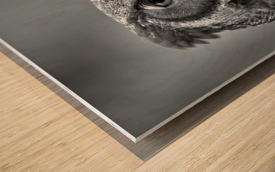 Great Horned Owl ap 2861 B&W Wood print