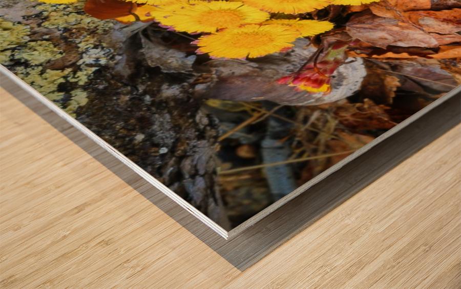 Flowers ap 2222 Wood print
