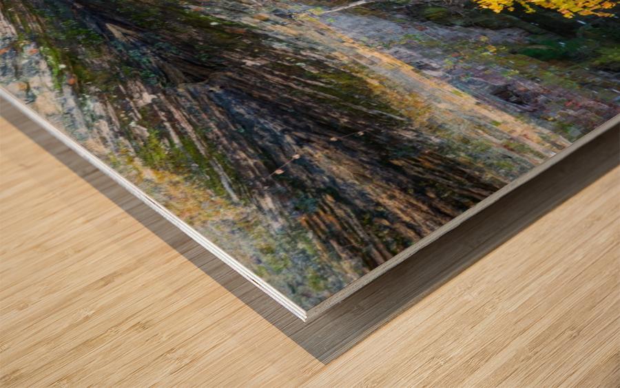 Reflection ap 2529 Wood print