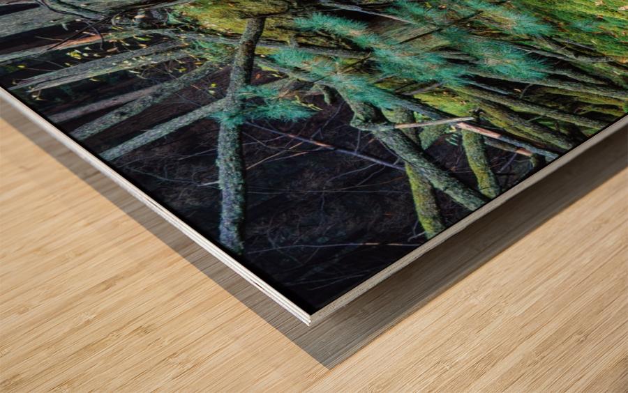 Fallen Giant ap 1513 Wood print
