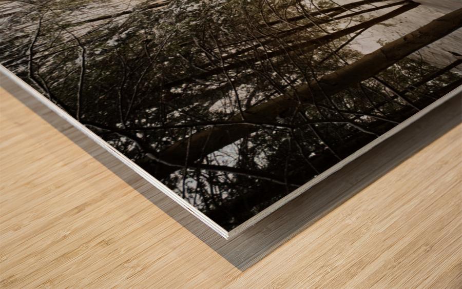 Sunlight ap 2731 Wood print