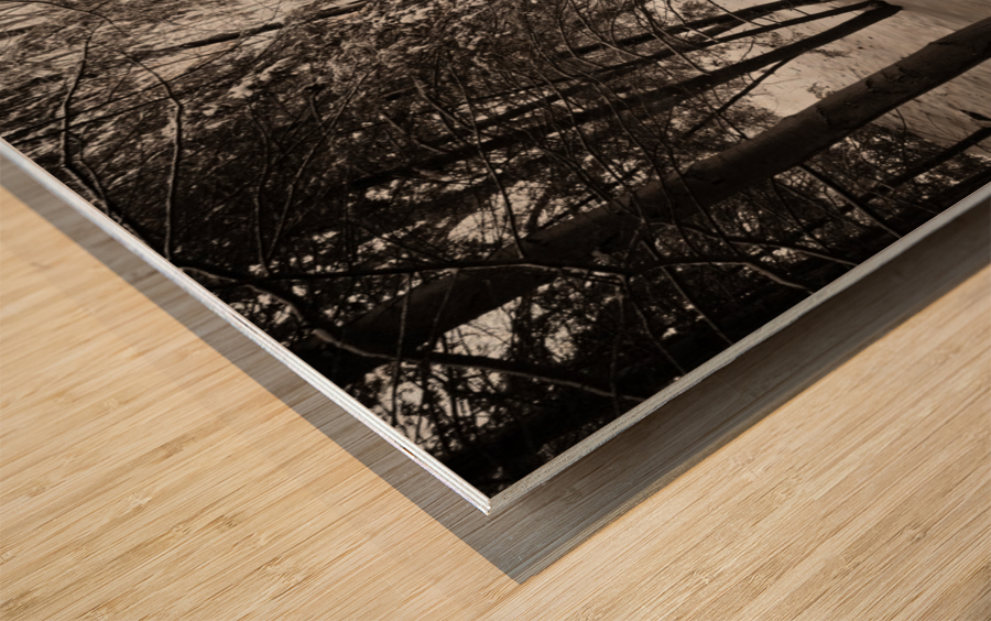 Sunlight ap 2731 B&W Wood print