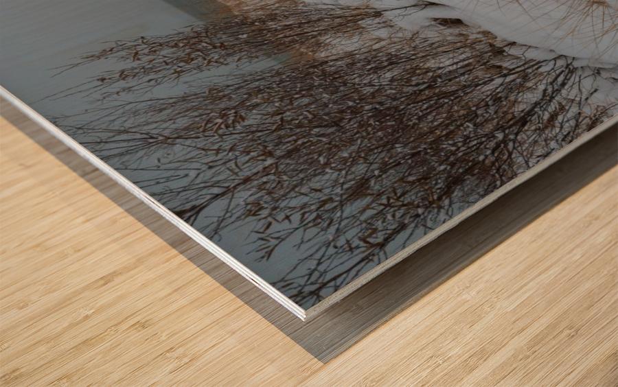 Duck Blind ap 2712 Wood print