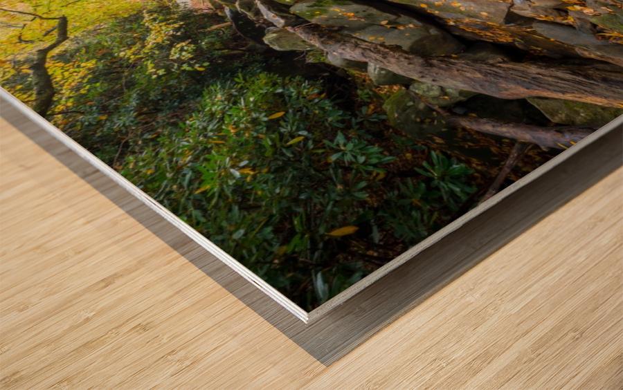 Reflections ap 2476 Wood print