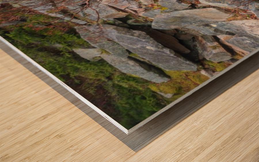 Nature apmi 1606 Wood print