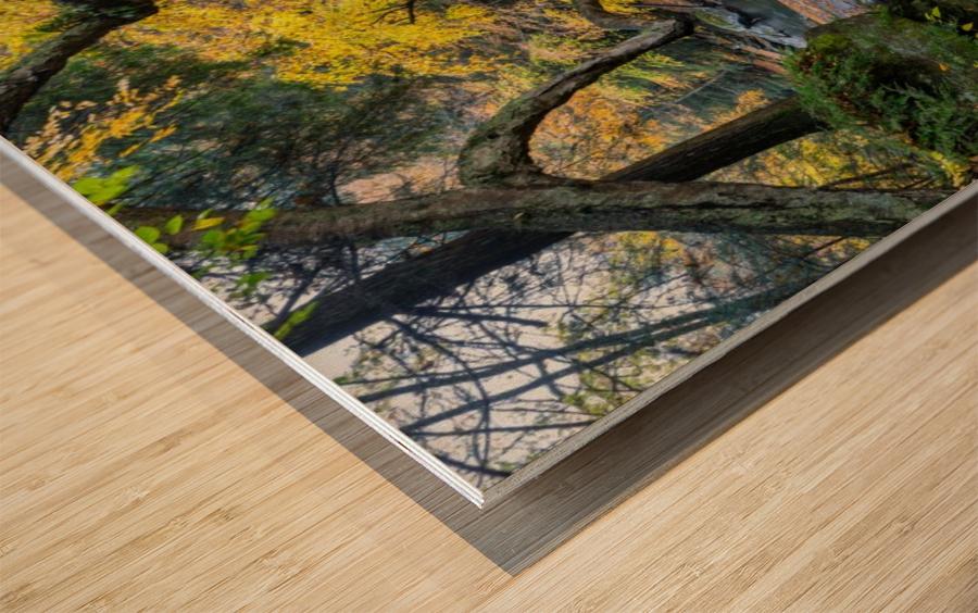 Birch apmi 1951 38x20 Wood print
