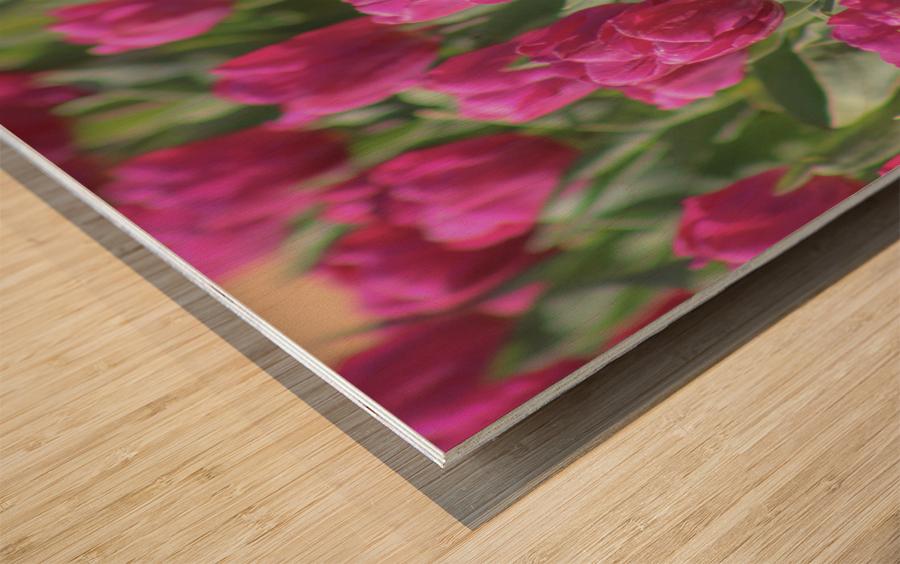 Fantasically Fuschia Tulips Wood print