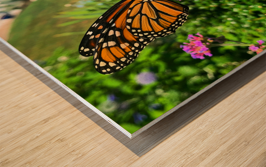 Butterfly Bliss  Wood print