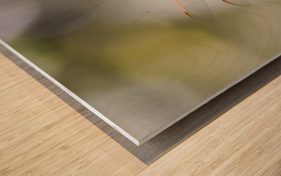 PEEK-A-BOO  Collection 1-4 Wood print