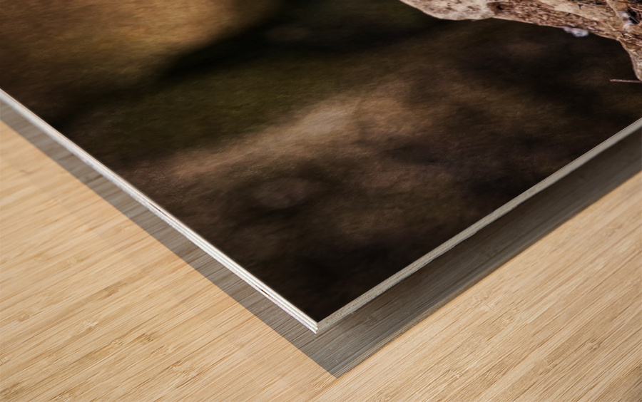 Bald Eagle on a Ledge Wood print