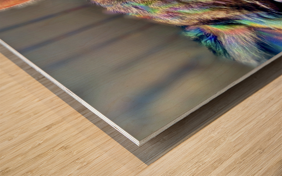 Rainbow Kitten Surprise  Wood print