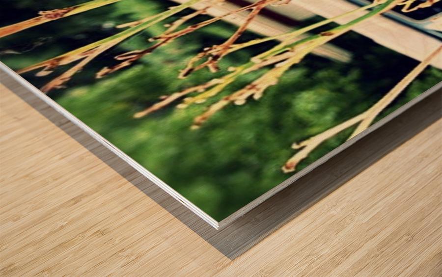 Van Life Wood print