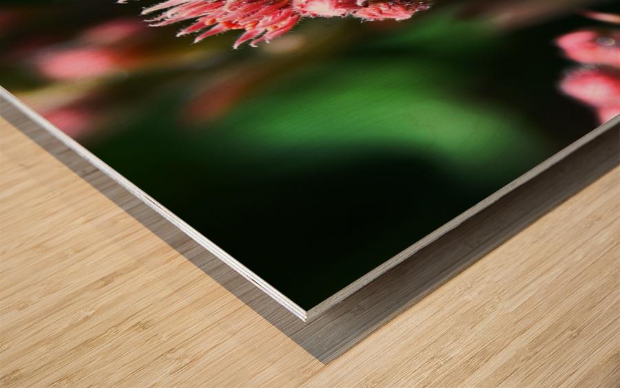 Sempervivum Wood print