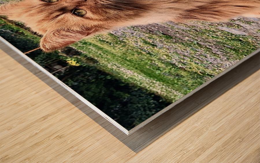 6EAF818C B42F 4654 9C27 07B4D4629391 Wood print