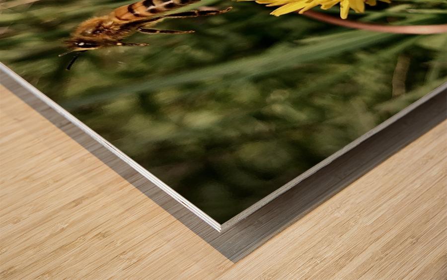EEE50D7C AA2E 4083 A9C6 76BAFE43F0C7 Wood print
