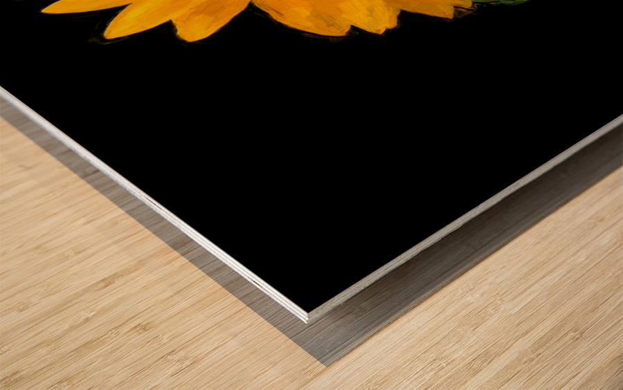Solitary Sunflower Wood print
