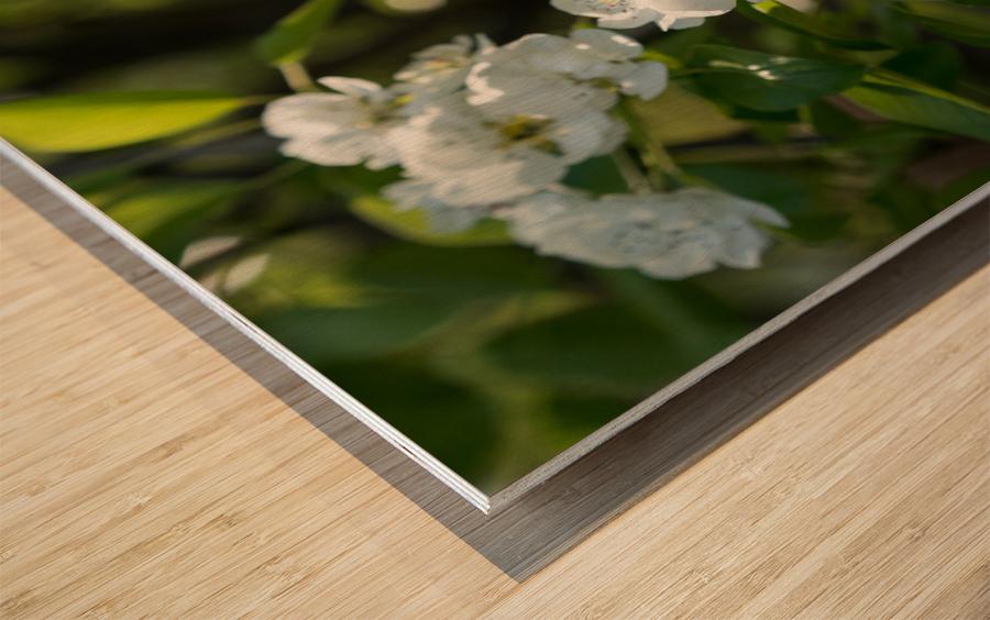 Poirier en fleurs 1  Impression sur bois