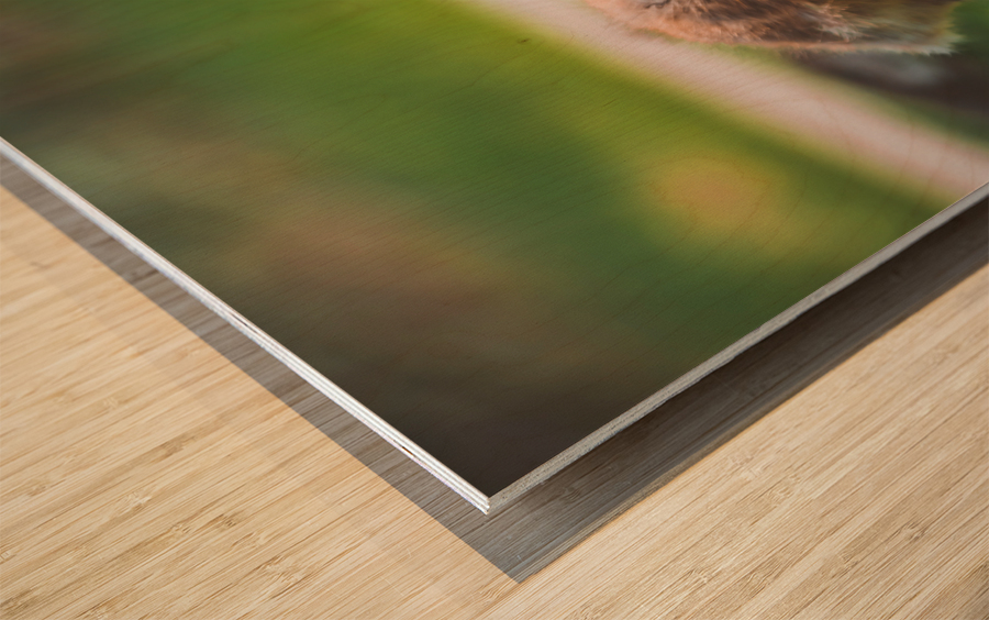Gooses  Wood print