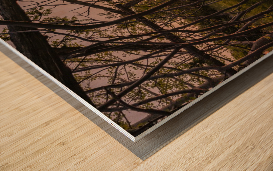Un lieu pour mediter - A place to meditate Wood print