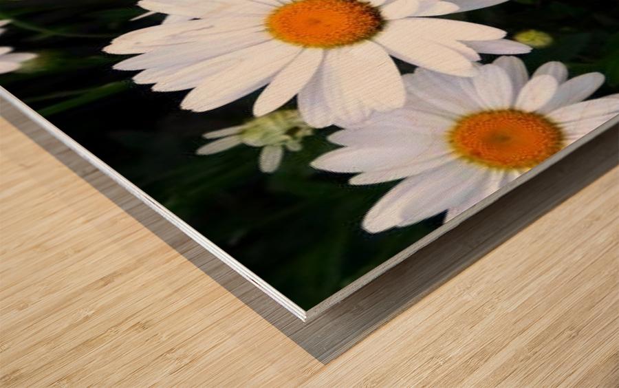 10392131_650028012172_7161699_n Wood print