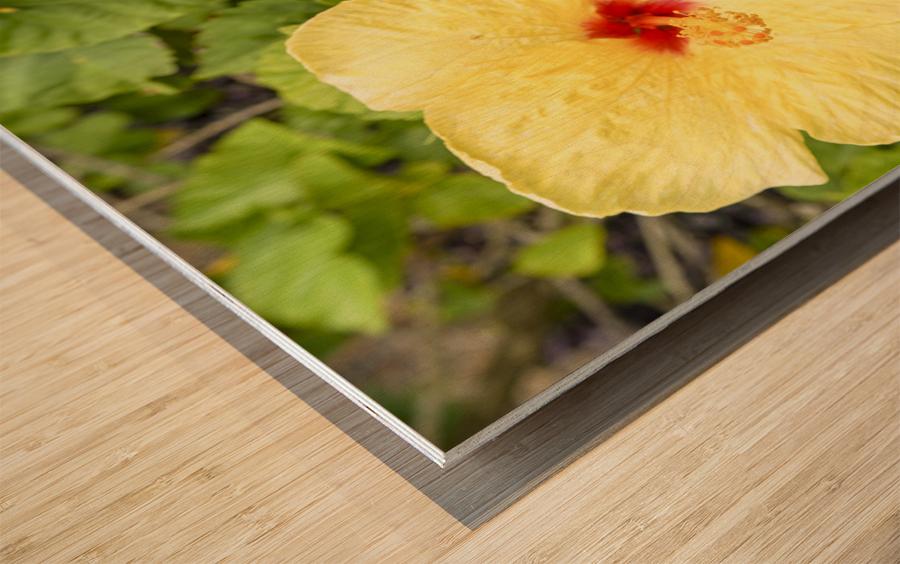 Hibiscus Trio   Tropical Flowers Hawaii Wood print