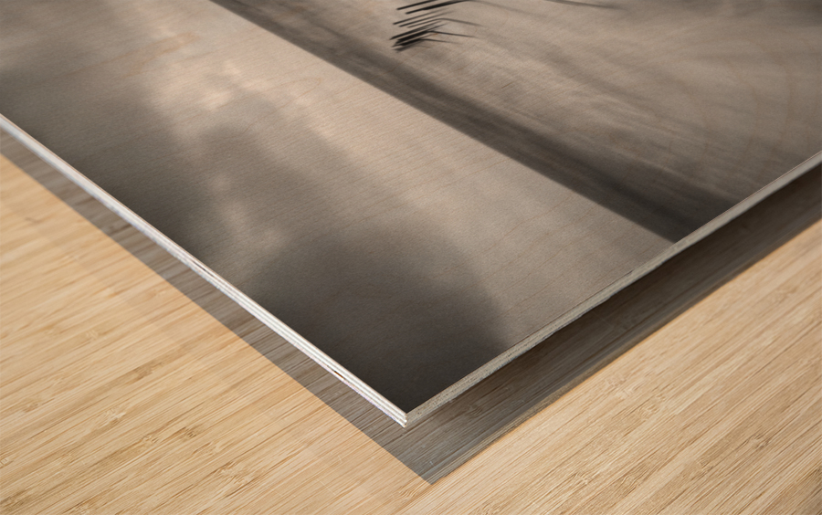 200113  P67 TRI X 002A Wood print