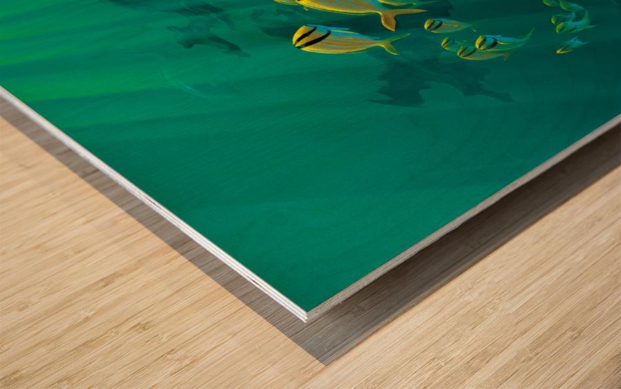 Atlantic Reef Wood print