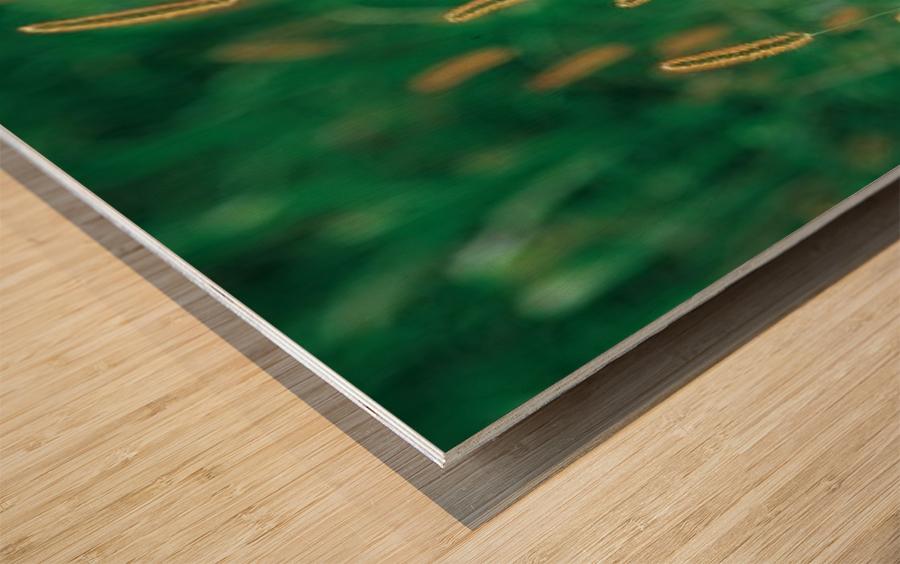 landscape_2_0157 Wood print
