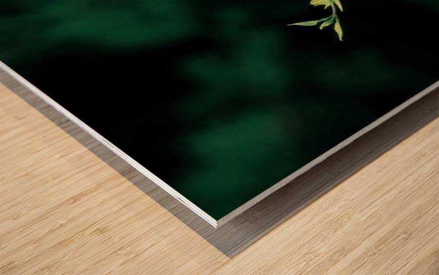 landscape_2_0163 Wood print