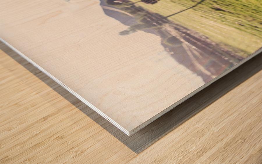 Afternoon Moos Wood print