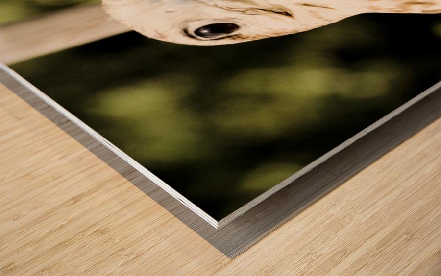 American Krestral Wood print