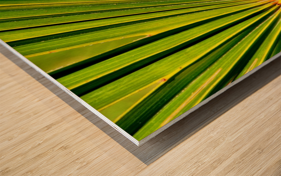 PALM-TREE LEAF 1 Wood print