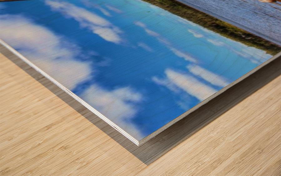 IMG_5545 Wood print