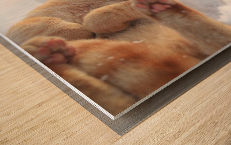 Rolling Wood print
